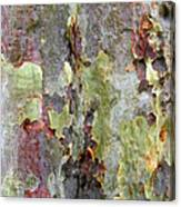 The Green Bark Of A Tree Canvas Print