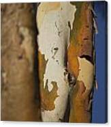 The Gum Tree Canvas Print