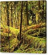 The Hall Of Mosses Canvas Print