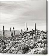 The High Desert  Canvas Print