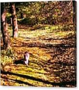 The Hiker Canvas Print