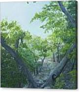 The Hiking Trail Canvas Print