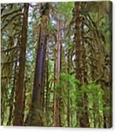 The Hoh Rain Forest Canvas Print