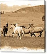 The Horse Herd Canvas Print