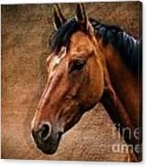 The Horse Portrait Canvas Print