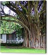 The House Beside The Banyan Tree Canvas Print