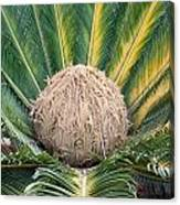 The Inside Of A Fern With The Large Flower In The Middle Canvas Print