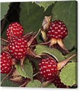 The Invasive Wine Berry And Shield Bugs Canvas Print