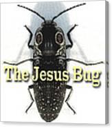 The Jesus Bug Canvas Print