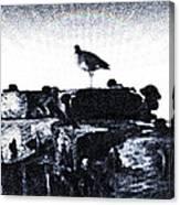 The Jetty Bird Canvas Print