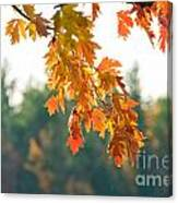 The Last Bit Of Fall Canvas Print