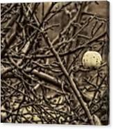 The Last Little Apple On The Tree Canvas Print