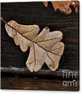 The Leaves Canvas Print