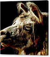 The Legendary Llama  Canvas Print