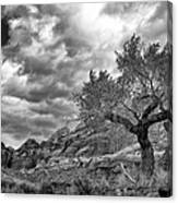 The Light On The Cottonwood Bw Canvas Print