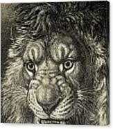 The Lion, King Of Beasts.  From El Canvas Print