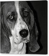 The Little Dog Canvas Print