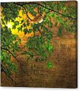The Little Sparrow In The Tree Canvas Print