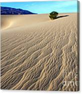 The Magic Of Sand Canvas Print