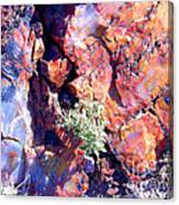 The Many Colors Of Petrified Wood Canvas Print