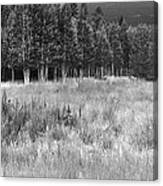 The Meadow Black And White Canvas Print