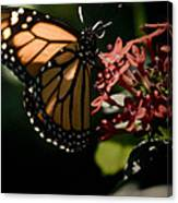 The Morning Monarch Canvas Print