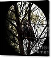 The Night Owl And Harvest Moon 2 Canvas Print