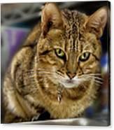 The Obligatory Cute Cat Photo Canvas Print