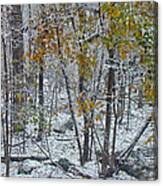 The October Blizzard Begins Canvas Print