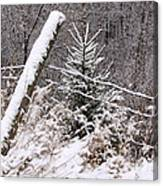 The Old Fence - Snowy Evergreen Canvas Print