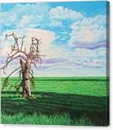 The Old Man On Green Valley Road Canvas Print