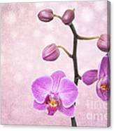 The Orchid Tree - Texture Canvas Print