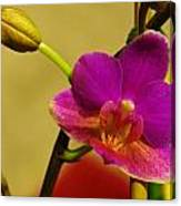 The Original Orchid Canvas Print