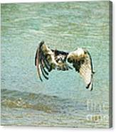 The Osprey Glare Canvas Print