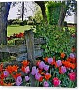 The Other Fence Canvas Print