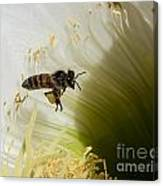 The Overloaded Bee Canvas Print