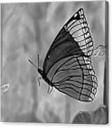 The Papillion Canvas Print