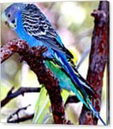 The Parakeet Canvas Print