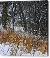 The Pasture Lane Canvas Print