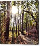 The Path Of Life Canvas Print