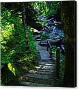 The Path To Iron Creek  Canvas Print