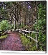 The Path To The Woods Canvas Print