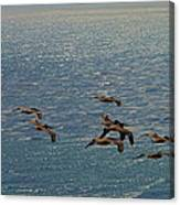 The Pelicans Hunting Canvas Print