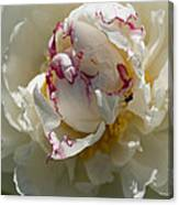The Peony And The Ant Canvas Print