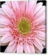 The Pink Flower Canvas Print