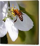 The Pollinator Canvas Print