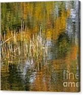 The Pond Shallows Canvas Print