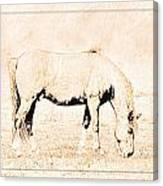 The Pony Canvas Print