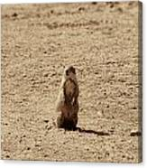 The Prairie Dog Canvas Print