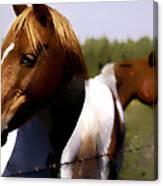 The Prairie Horses Canvas Print